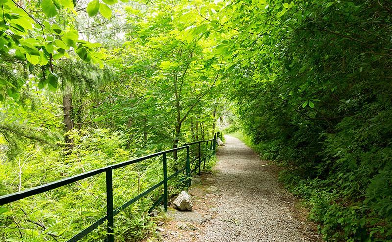 Ayubia Hiking Trail in Murree